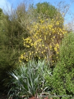 Native Dell - Kowhai